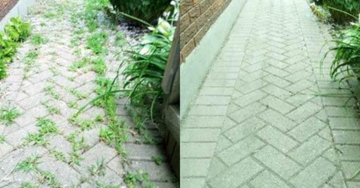 mauvaises herbes dans votre jardin