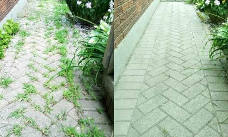 d barrassez vous des mauvaises herbes dans votre jardin et autour de votre maison gr ce au. Black Bedroom Furniture Sets. Home Design Ideas