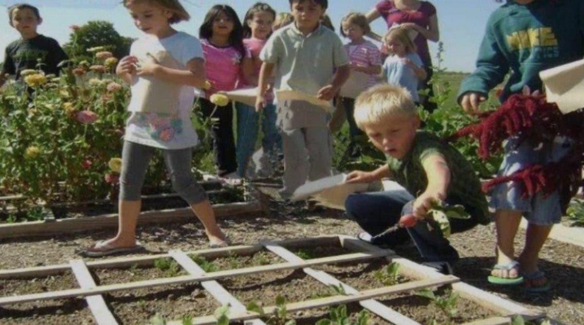 message-au-ministre-de-leducation-national-il-faudrait-apprendre-aux-enfants-a-cultiver-des-fruits-et-legumes-a-lecole