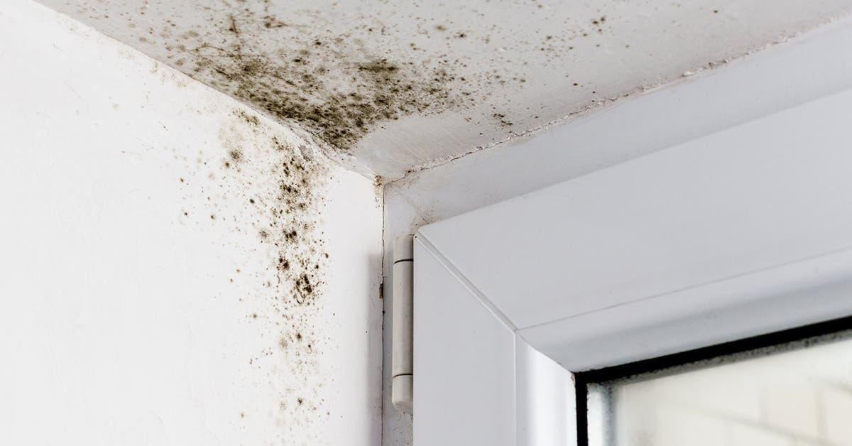 Comment enlever la moisissure des murs pour qu'elle ne revienne jamais