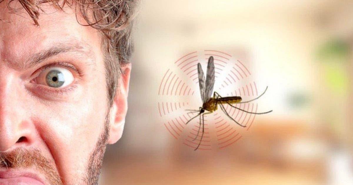 les moustiques aiment-ils tant bourdonner dans nos oreilles