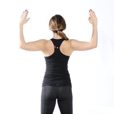 muscle du dos
