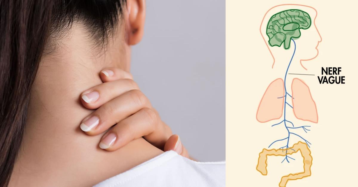 Les Symptômes du nerf vague enflammé et les remèdes pour le soulager