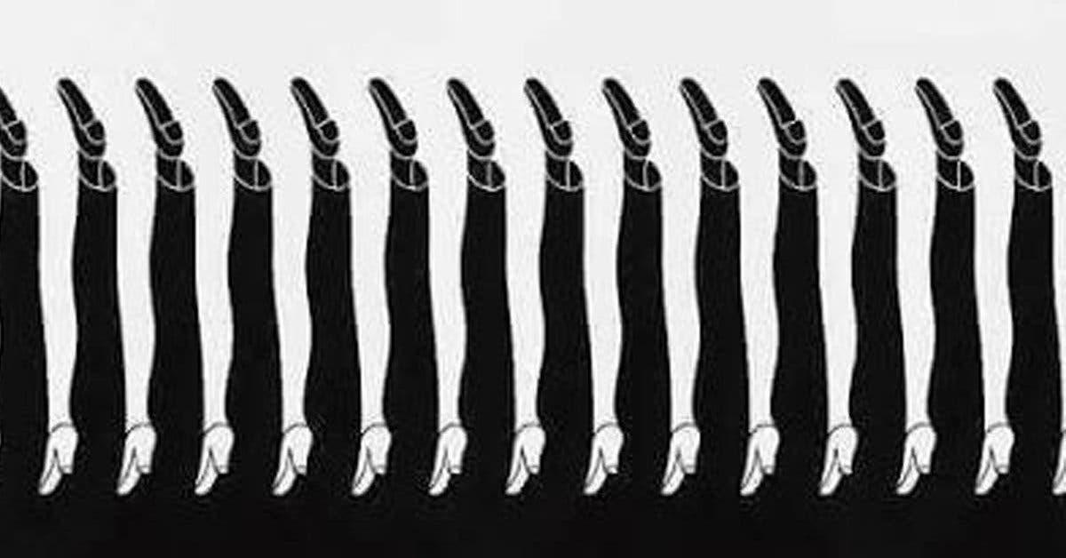 nombre de jambes