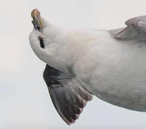 oiseau relaxer 1
