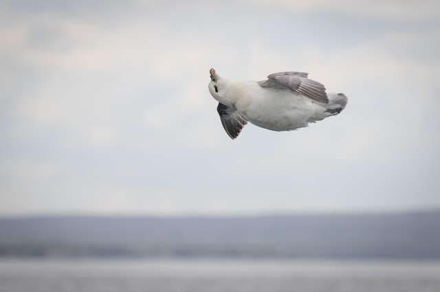 oiseau relaxer