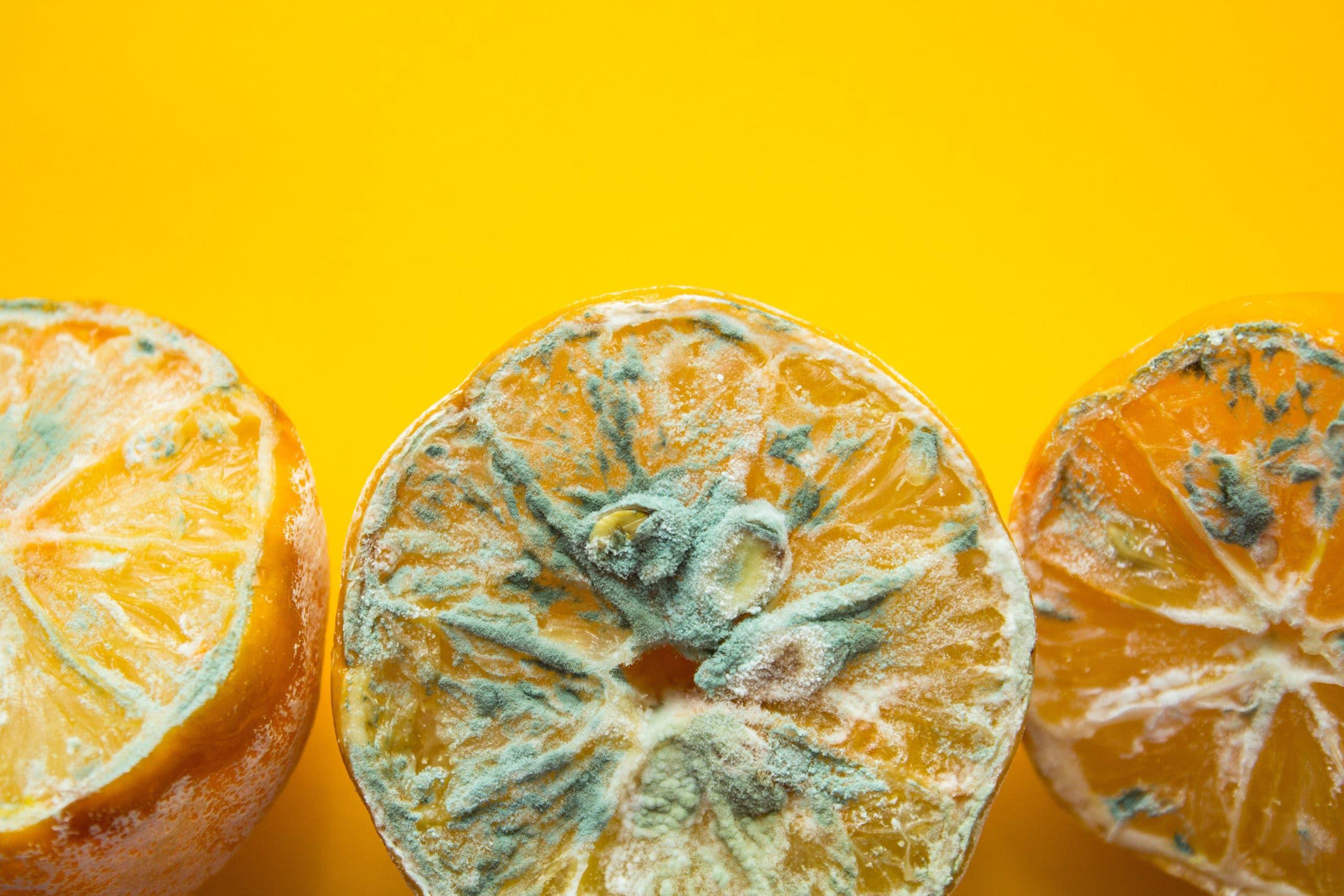 orange moisie