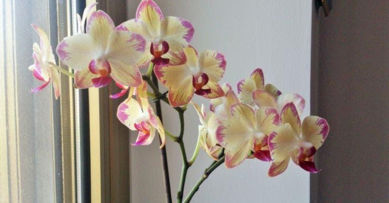 orchideesmaison