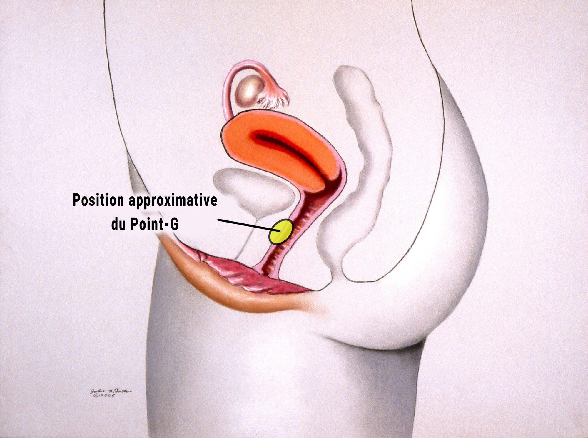 orgasme point g