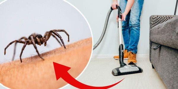 oui-une-araignee-peut-survivre-longtemps-dans-un-aspirateur-et-peut-meme-sen-echapper