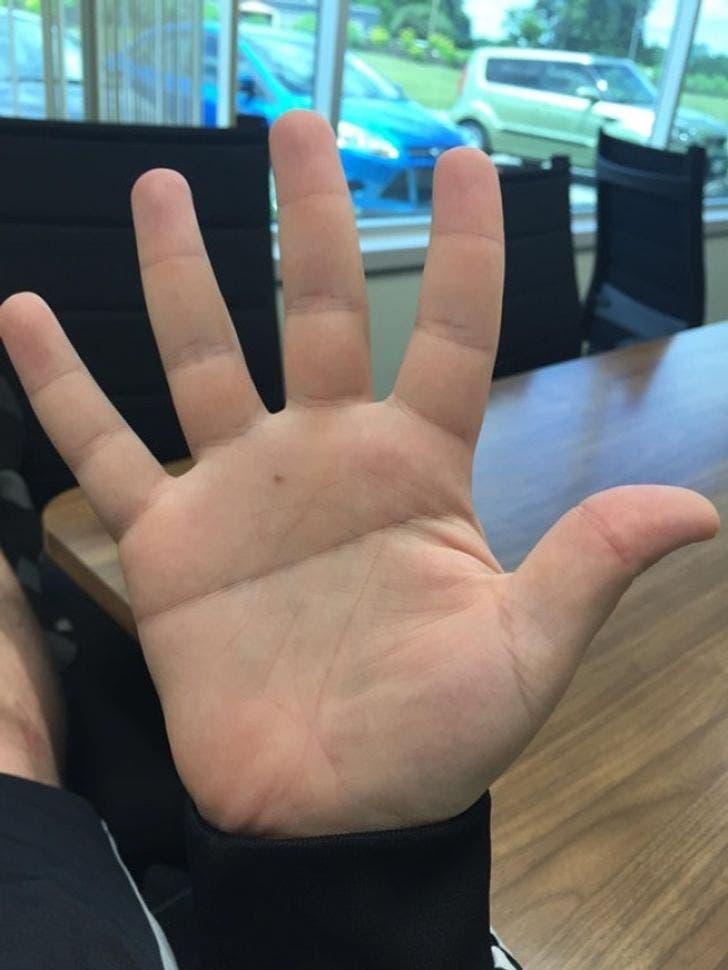 palme main