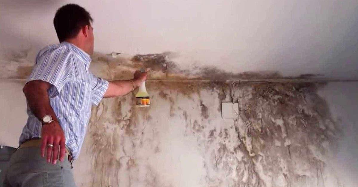 10 astuces pour enlever les taches d'humidité sur les murs peints