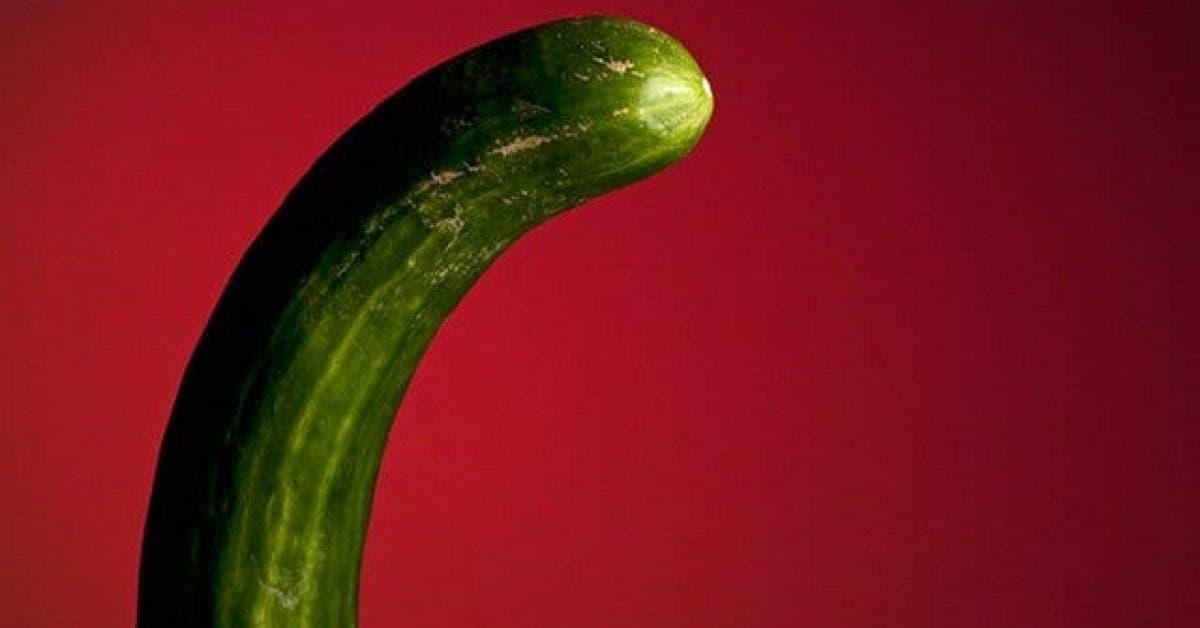penis type