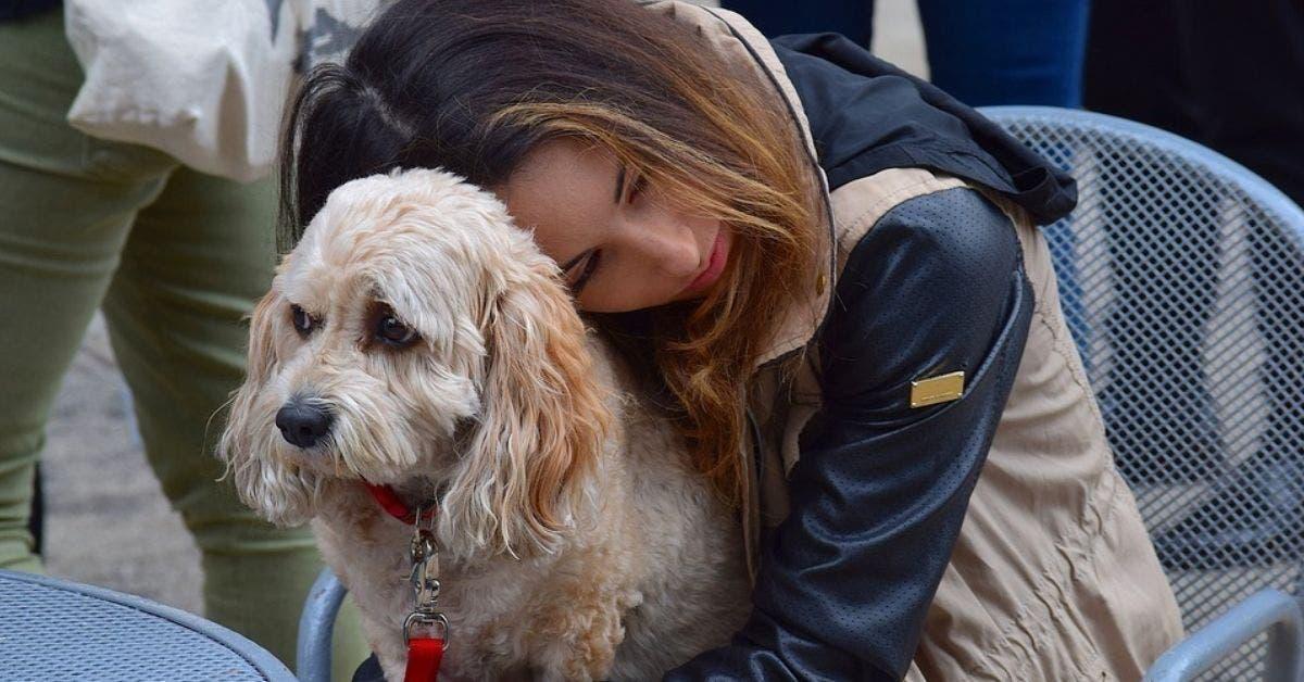 perdre un chien peut etre aussi difficile que perdre un etre cher dapres des etudes 1