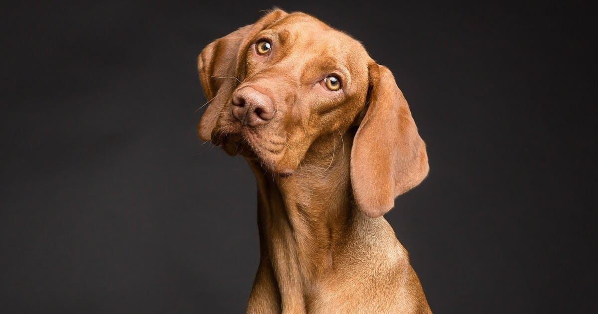Les scientifiques expliquent la raison pour laquelle perdre un chien a le même effet que perdre un être cher