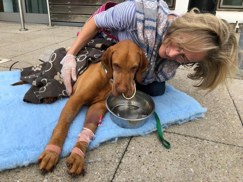 petit chien meurt pour avoir mangé un brownie