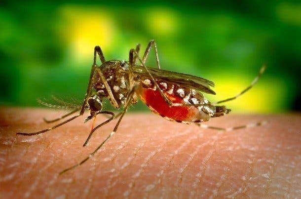 piege moustiques