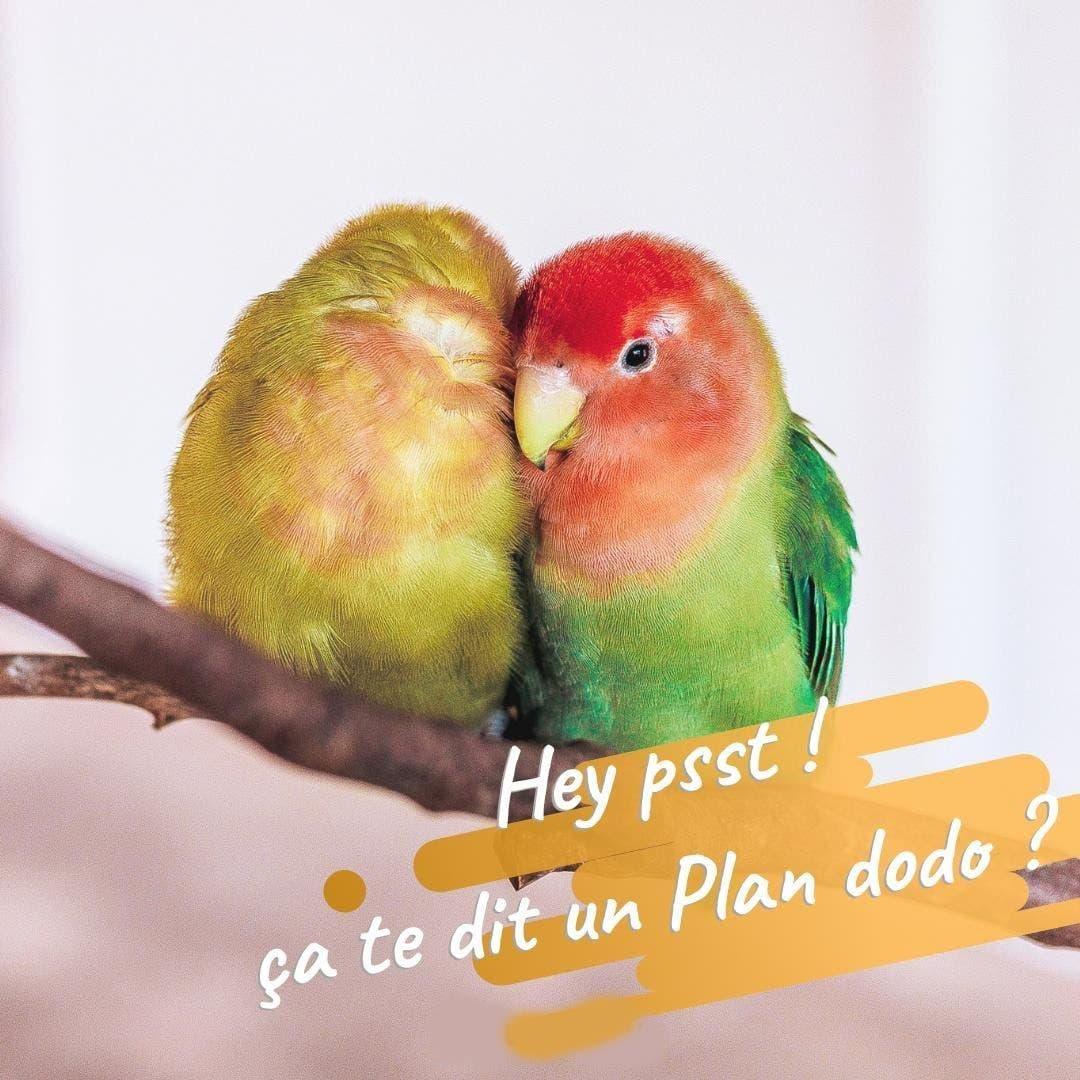 plan dodo