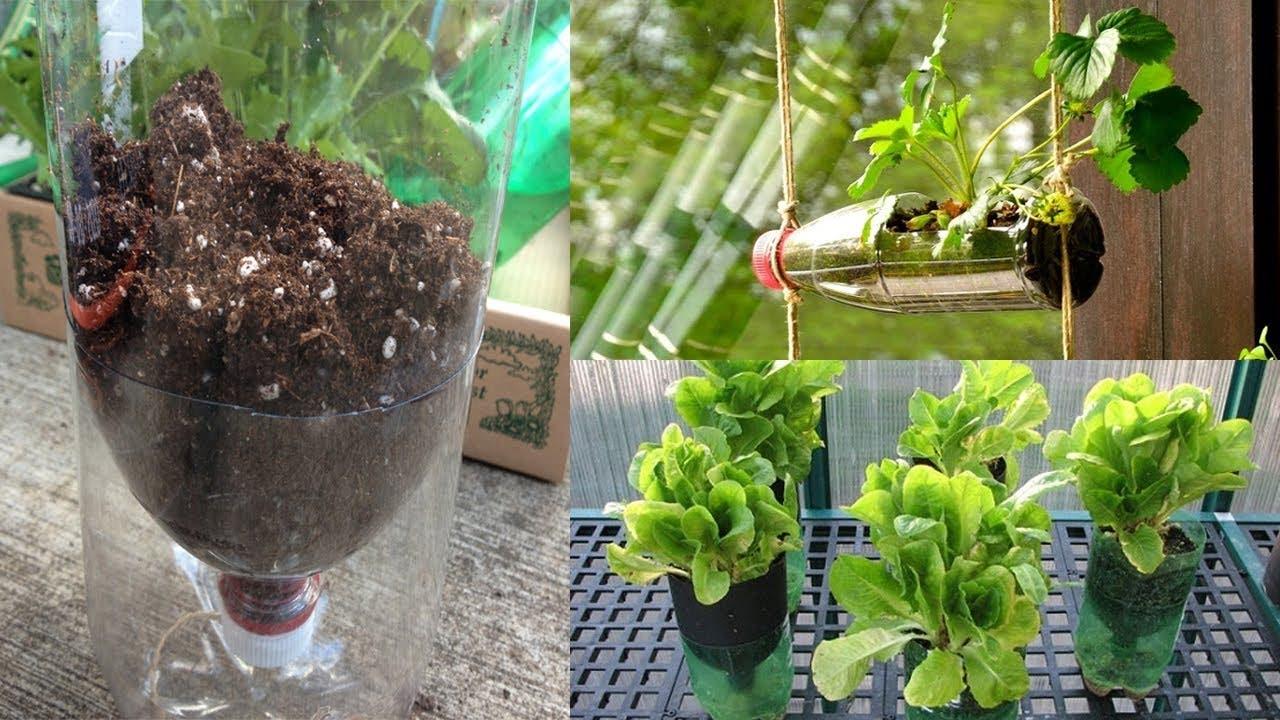 planter dans bouteille plastique