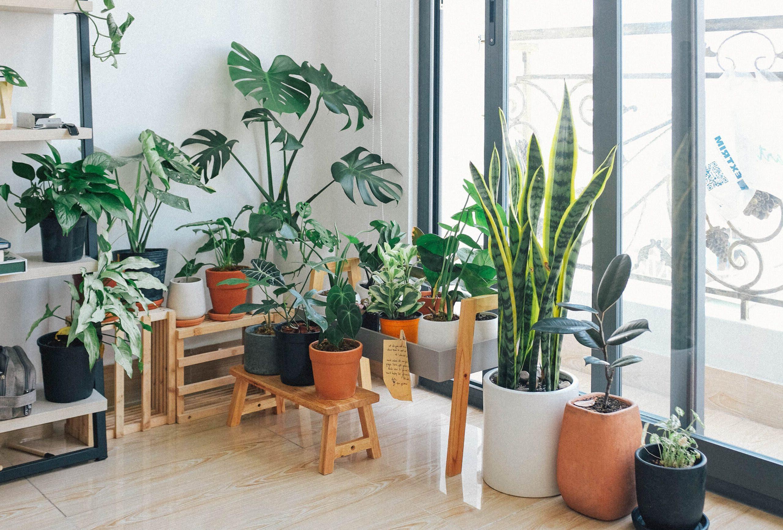 plantes a la maison