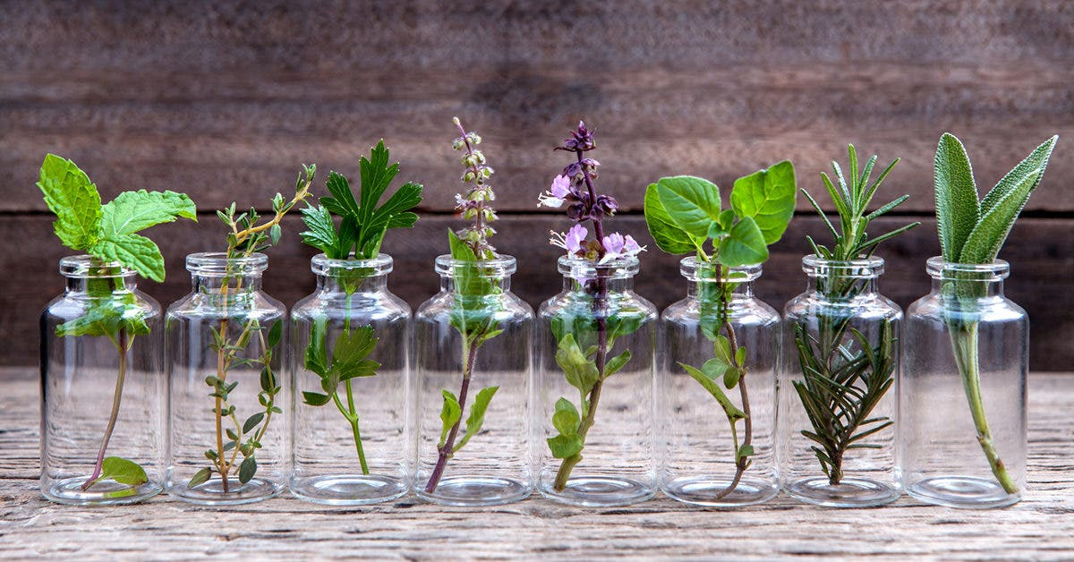 10 plantes aromatiques qui n'ont pas besoin de terre pour pousser