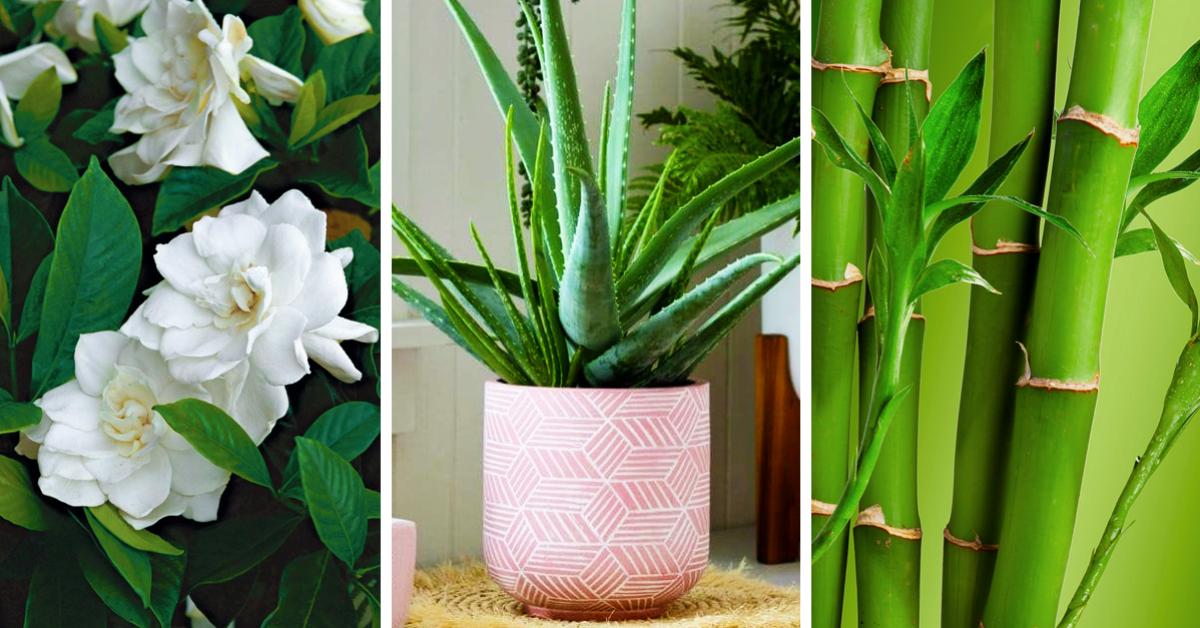 7 plantes pour décorer votre chambre qui favorisent un bon sommeil