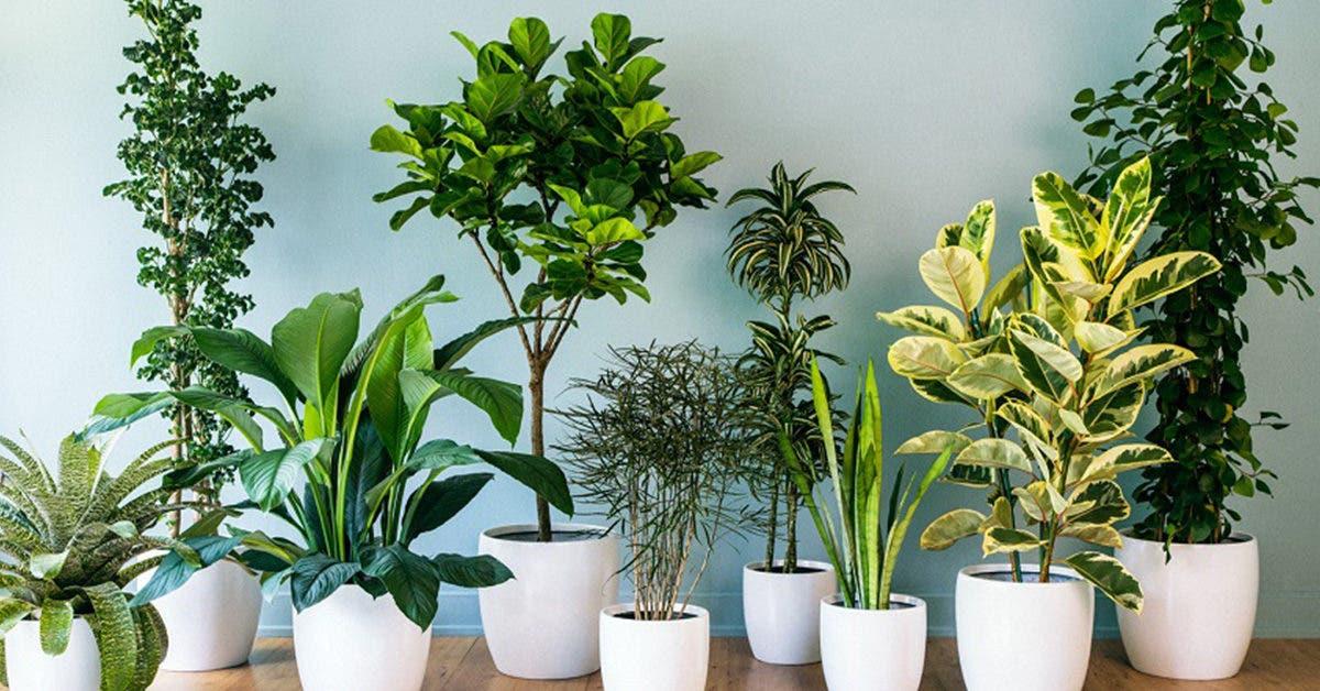 6 plantes qui chassent les mauvais esprits et les mauvaises énergies de la maison