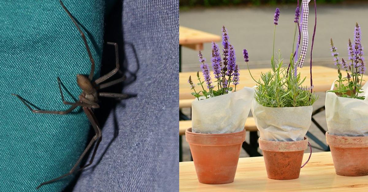 8 plantes ultra efficaces pour éloigner les moustiques, les fourmis, les araignées et bien d'autres nuisibles