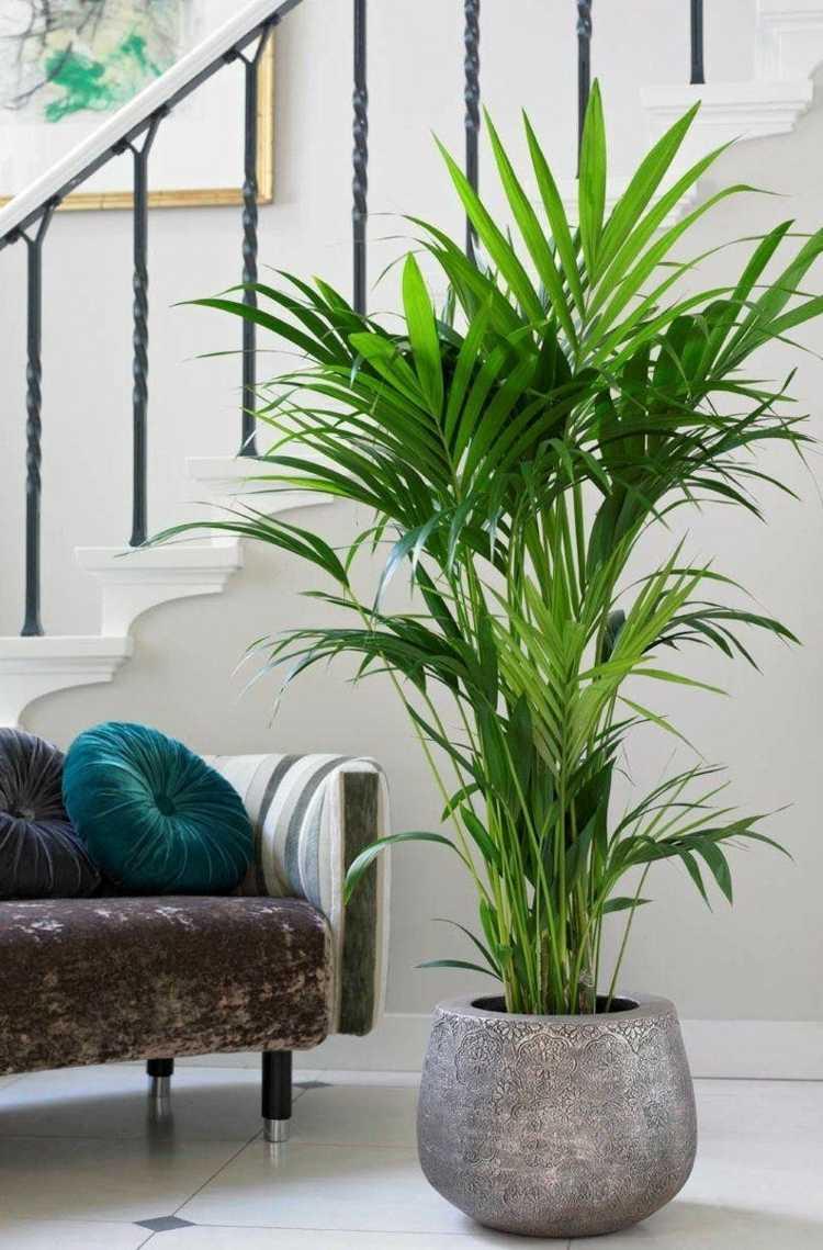 10 plantes qui portent chance et apportent une énergie positive dans la maison