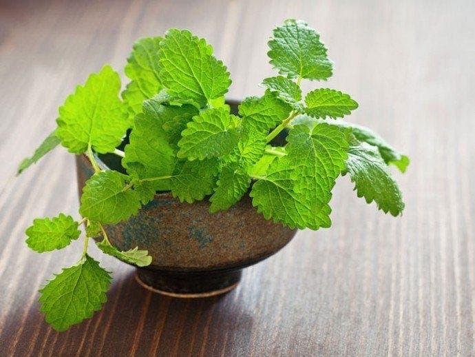 10 plantes que vous pouvez faire pousser chez vous dans une bouteille d'eau