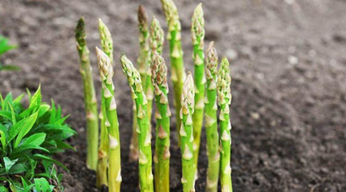 plantez-une-fois-cueillez-pour-toujours-9-legumes-nont-besoin-detre-plantes-quune-seule-fois-pour-etre-cueillis-pour-toujours