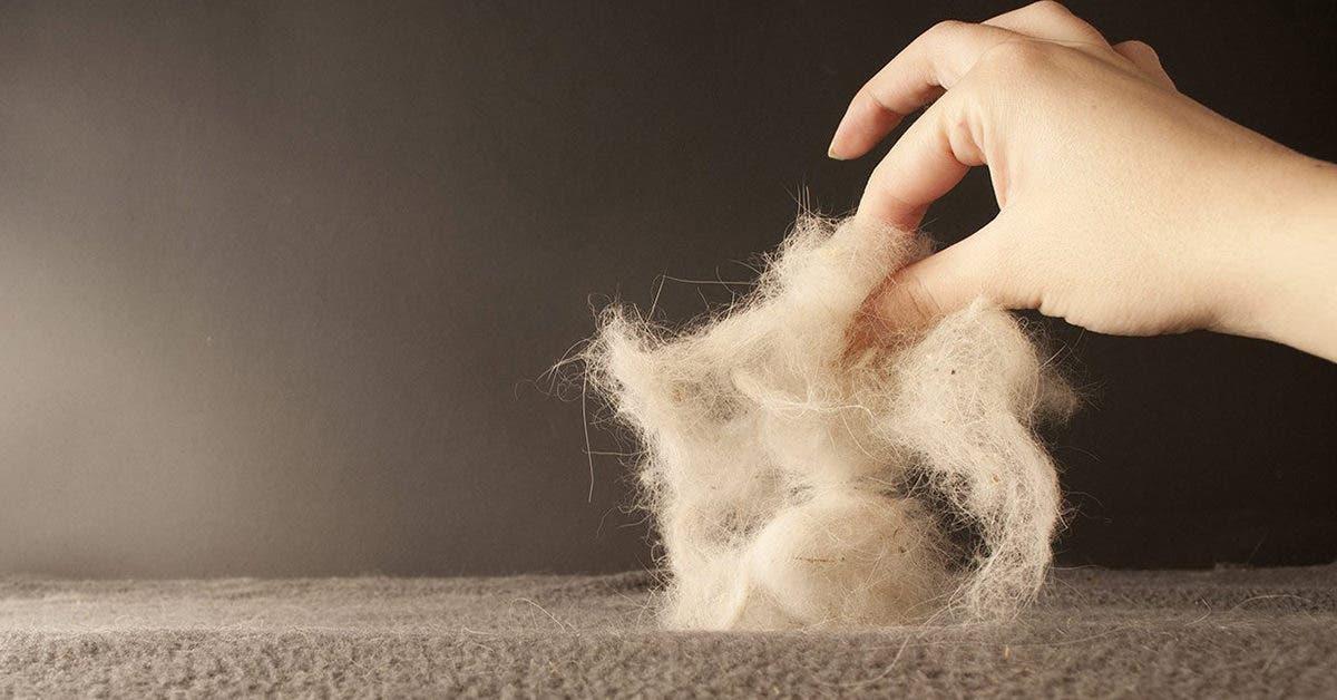 4 astuces efficaces pour éliminer les poils d'animaux de vos vêtements et de toutes les surfaces de la maison