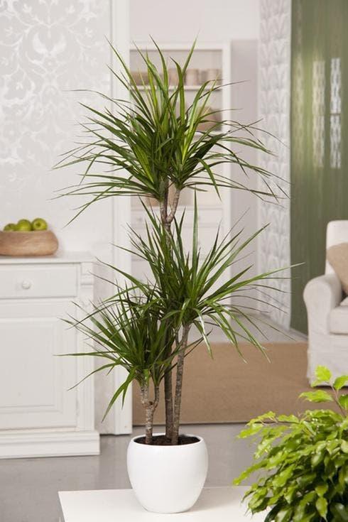plantes dans votre maison protègent des radiations