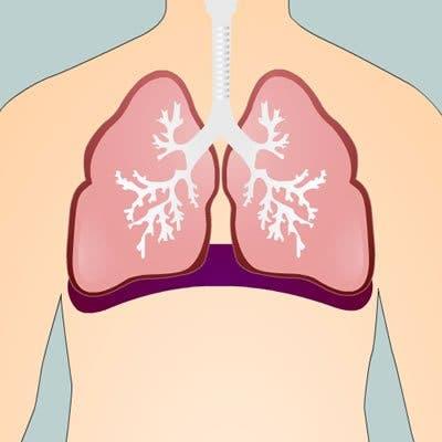poumons 4