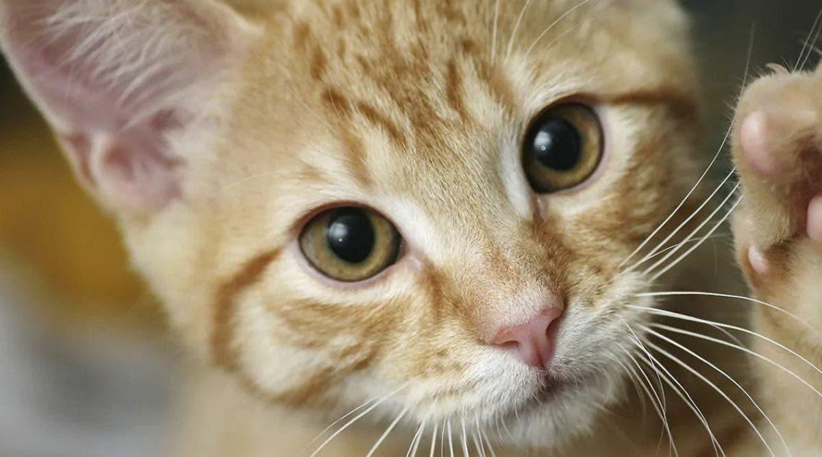 pourquoi-les-chats-roux-etre-differents-des-autres-chats