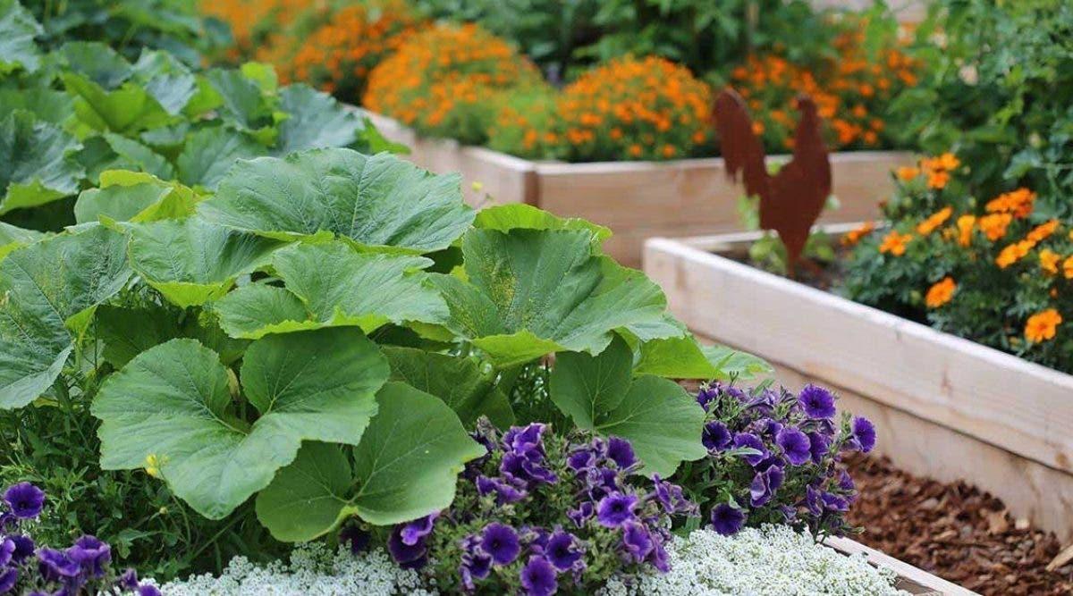 pourquoi-les-jardiniers-devraient-toujours-planter-des-fleurs-a-cote-des-legumes