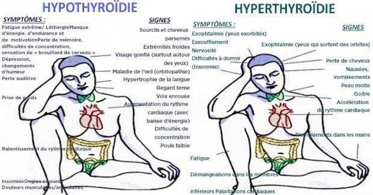 quelles differences entre lhypo de lhyperthyroidie et quels sont les traitements les plus adaptes 2