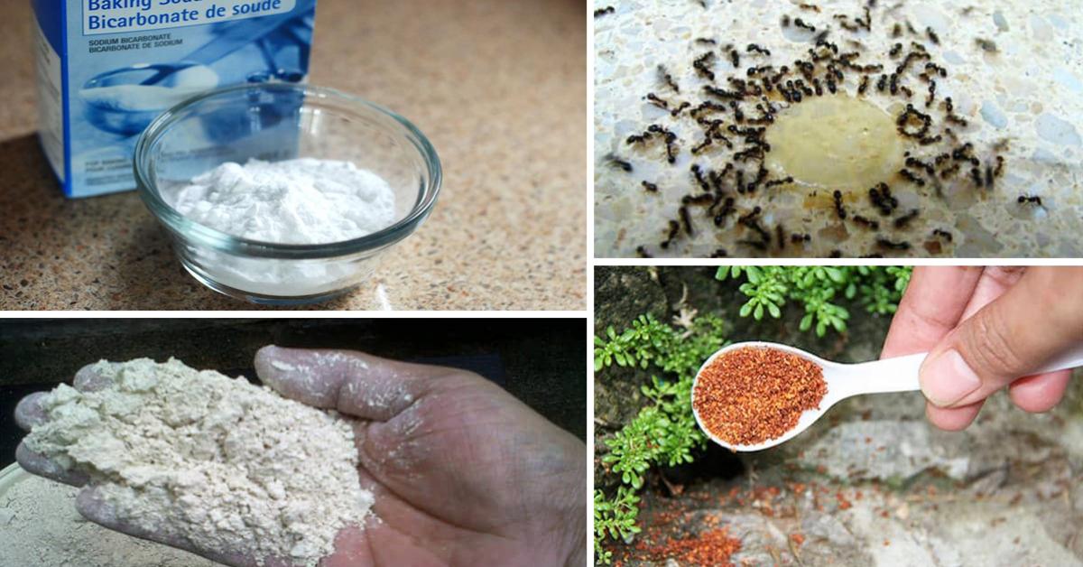 10 remèdes maison extrêmement puissants pour se débarrasser des fourmis