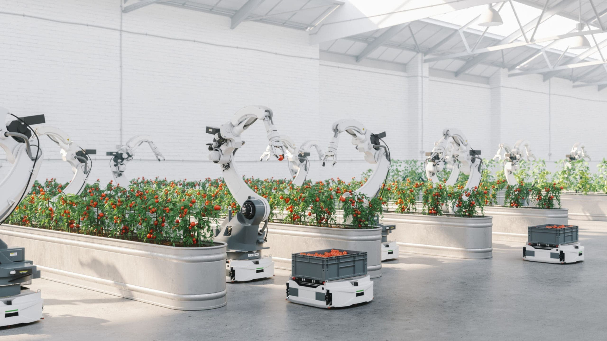 robot potager