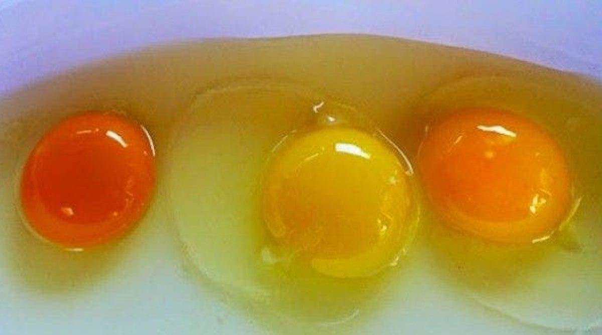 Saurez-vous deviner lequel de ces jaunes d'œufs provient d