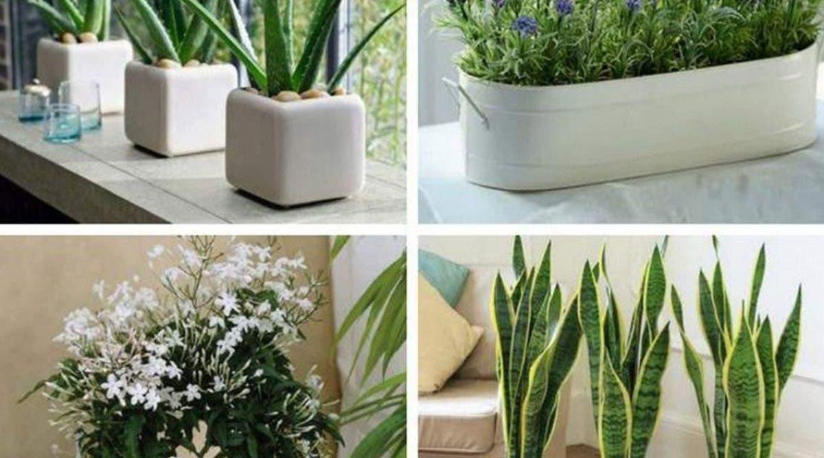 si-vous-mettez-lune-de-ces-4-plantes-dans-votre-chambre-vous-pourrez-ameliorer-votre-sommeil