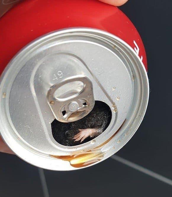 souris coca cola