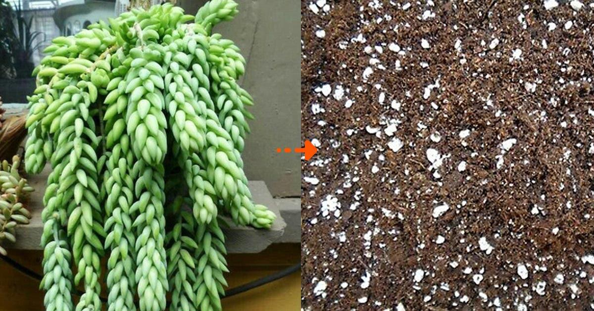 Comment faire un bon substrat maison pour succulentes (4 recettes)