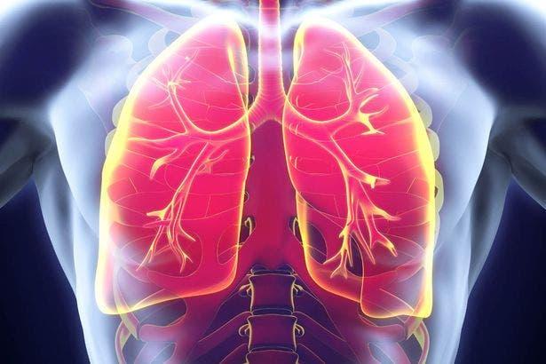 systeme respiratoire
