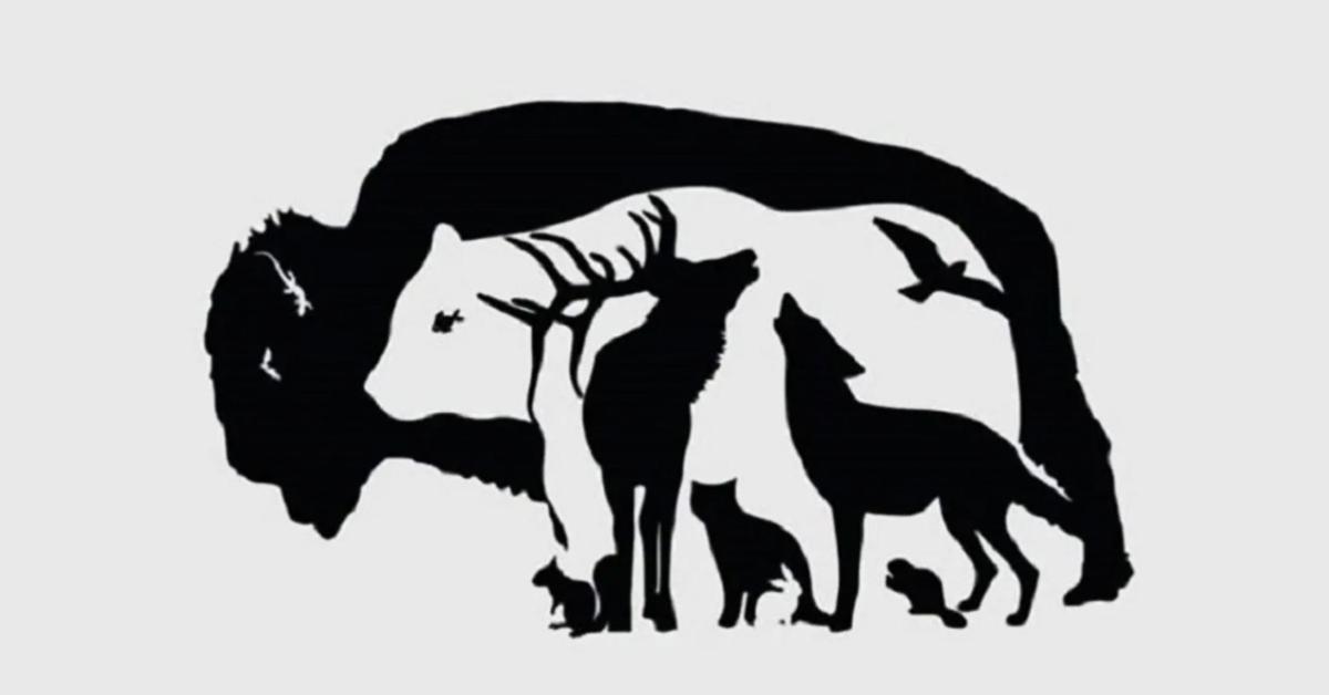 Combien d'animaux pouvez-vous trouver ? Le nombre indique votre niveau d'observation