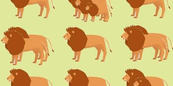 test--combien-de-lions-voyez-vous