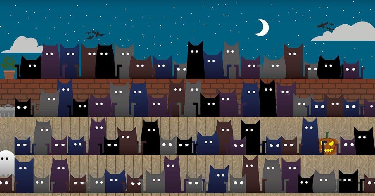 test--parmi-les-chats-pourrez-vous-reperer-le-chapeau-de-la-sorciere