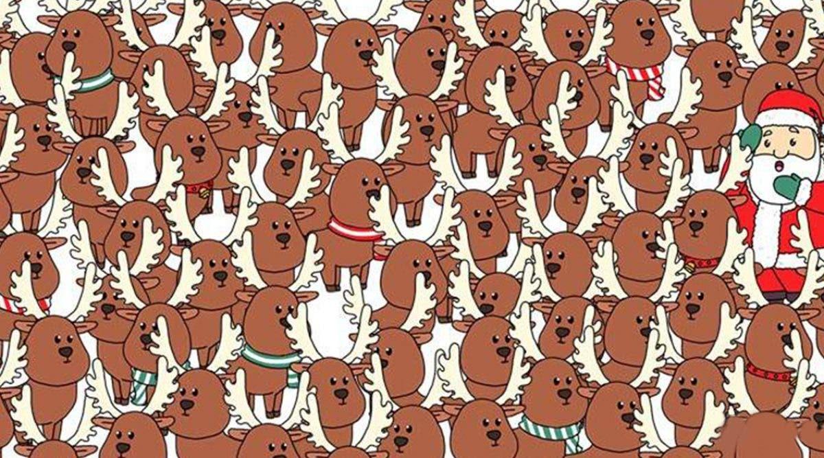 test--pouvez-vous-retrouver-lours-cache-parmi-les-rennes