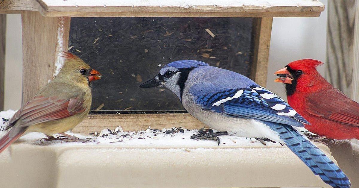 tout-sur-lalimentation-des-oiseaux-en-hiver--aliments-mangeoires-et-plus-encore