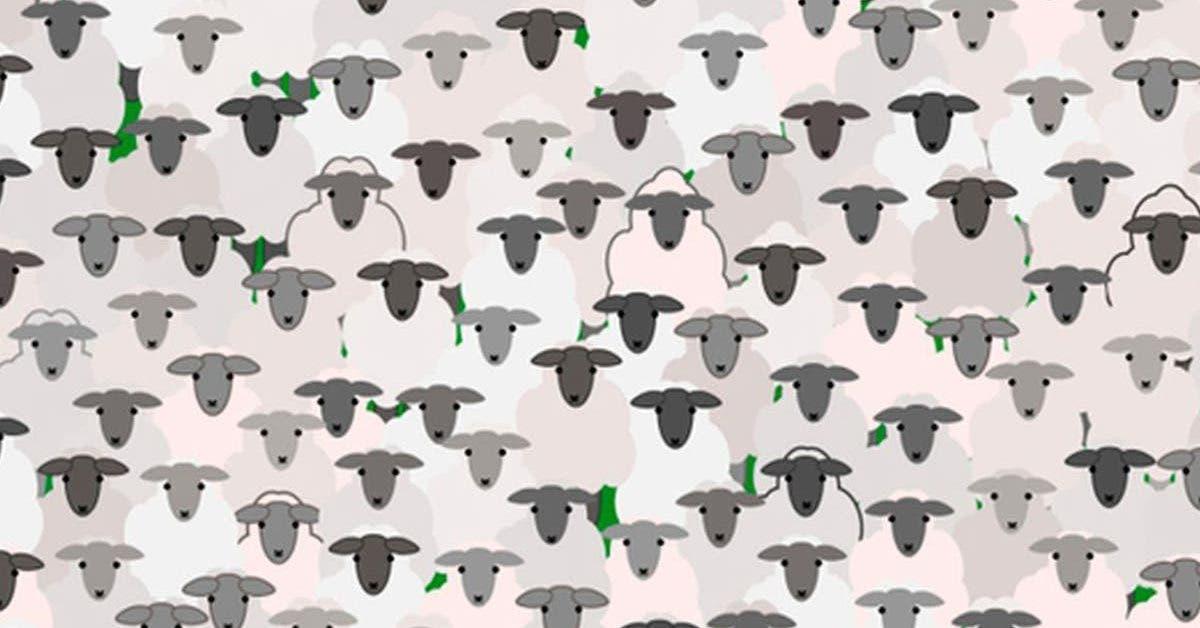trouver-la-chevre-parmi-les-moutons-le-nouveau-defi-viral-presque-impossible-a-resoudre